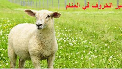 Photo of الخروف في المنام