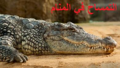 Photo of التمساح في المنام