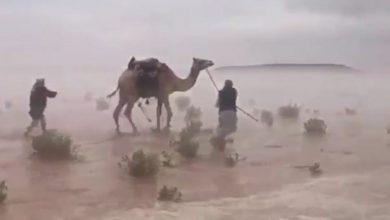 Photo of موثق فيديو الإبل والمطر يكشف تفاصيل الواقعة: خاطرتُ بنفسي لأنقذها