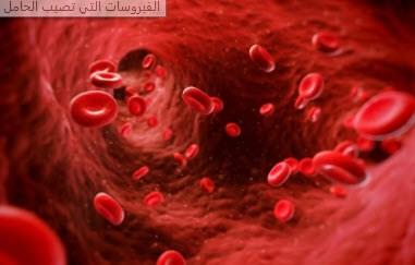 الفيروسات التي تصيب الحامل
