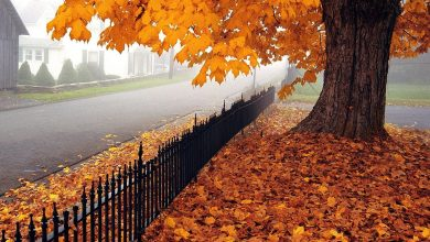 Photo of كلام جميل عن الخريف ,خواطر أوراق الخريف,عبارات عن الخريف