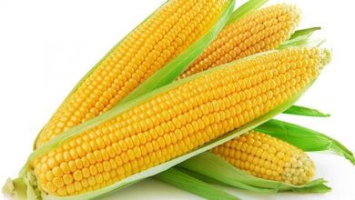 Photo of أنواع الذرة , الفرق بين الذرة البيضاء والذرة الصفراء , فوائد الذرة ,