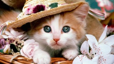 Photo of 5 امراض تصيب القطط , الامراض التي قد تصيب القطط