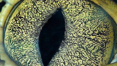 Photo of عندما تشاهد الحيوانات تحت المجهر