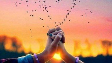 Photo of احبك بجنون , كلمات حب لك