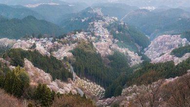 Photo of أفضل الأماكن لمشاهدة أزهار الربيع باليابان