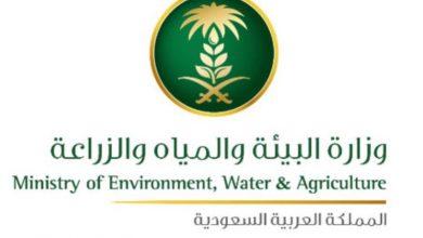 Photo of وزارة البيئة تعلن 93 وظيفة إدارية .. هنا رابط التقديم