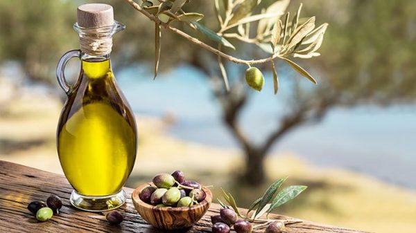 فوائد زيت الزيتون لكل الجسم بالتفصيل مجلة رجيم