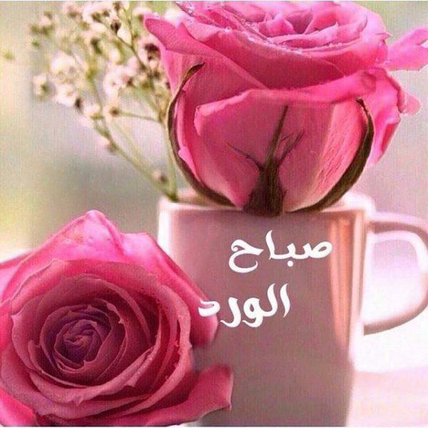 صباح الورد والياسمين