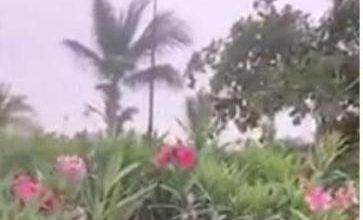 Photo of تفاصيل انتشار وردة الحمار القاتلة في كورنيش جدة