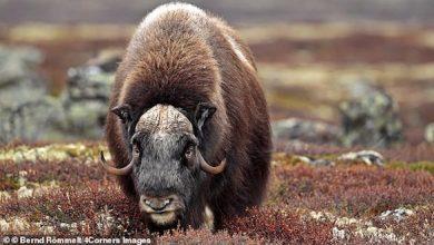 Photo of أفضل وجهات سياحية لرؤية الحيوانات المهددة بالانقراض