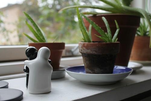 aloe-vera-plante-verte-medecine-miracle-02