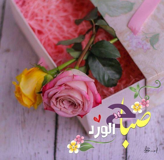 صباح الورد حبيبي تويتر