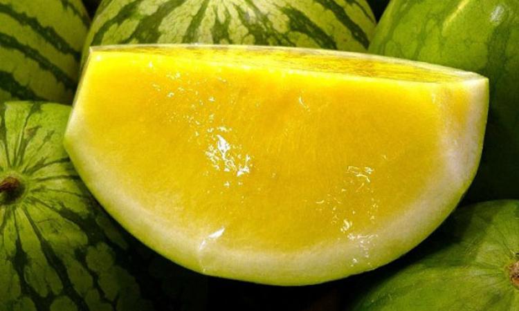 فوائد البطيخ الاصفر المذهلة للرجيم