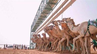 Photo of للمرة الأولى.. المرأة تشارك في ختام سباق الهجن بالسعودية