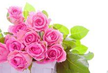Photo of ما هي أهم فوائد الورد الجوري