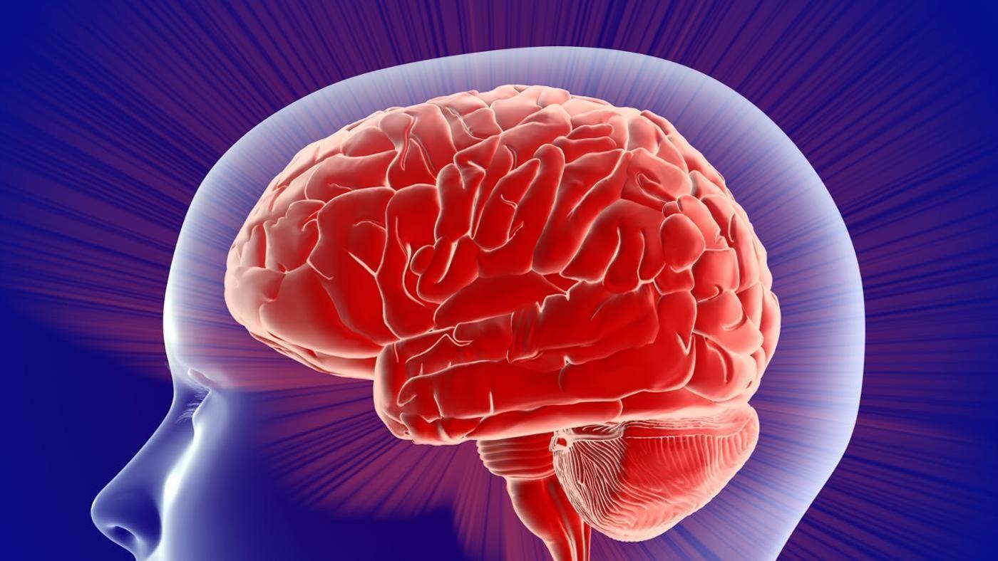 نظرية النصفين الكرويين للدماغ