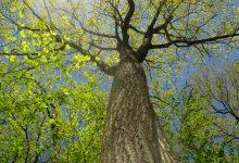 Photo of ما هي فوائد الأشجار