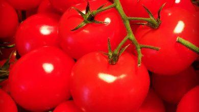 Photo of ما أضرار الطماطم