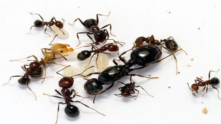 طرق التخلص من النمل نهائيا