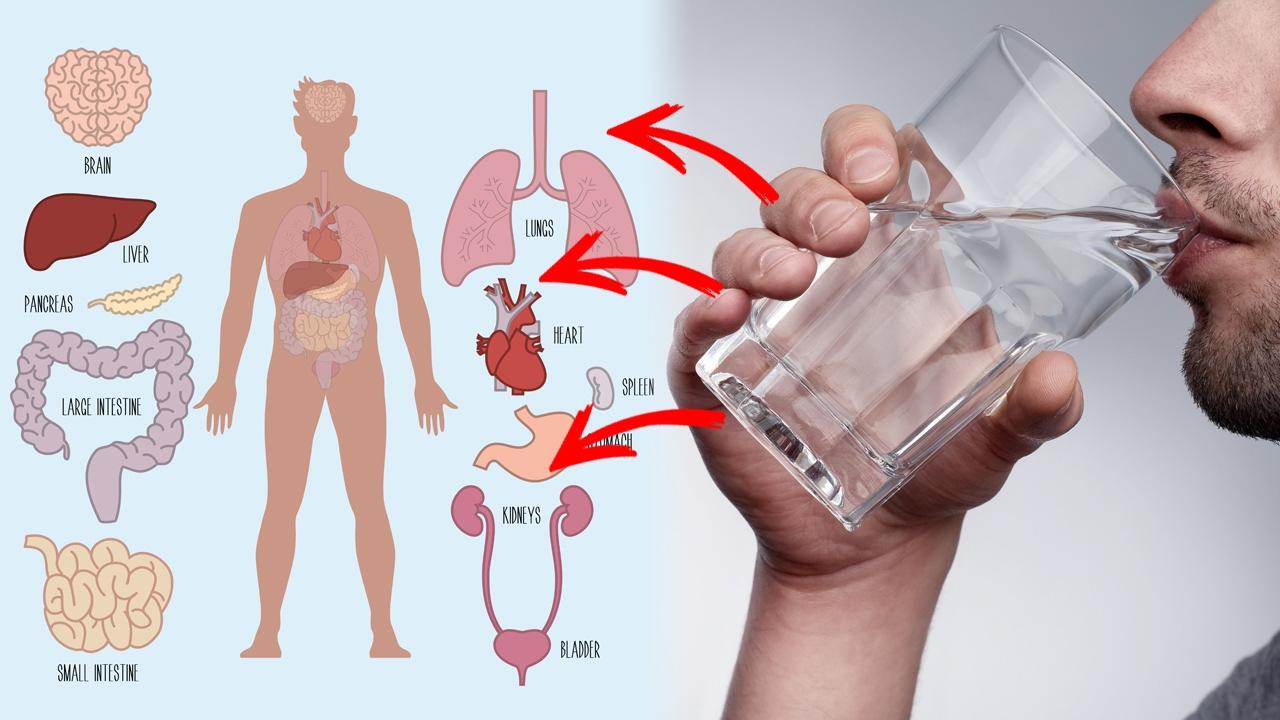 رجيم الماء الدافئ للتخسيس