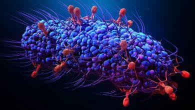 Photo of قصة عن البكتيريا