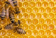 Photo of ما هي فوائد العسل