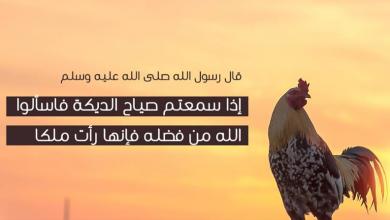 Photo of دعاء صياح الديك