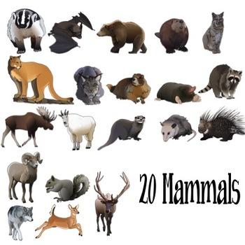 صور حيوانات الجبال