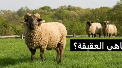 Photo of ماهي العقيقة ؟
