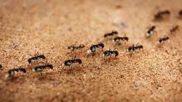 كيفية التخلص من النمل في منزلك