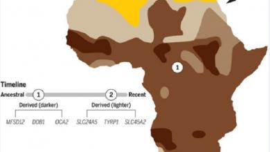 Photo of ما هي خريطة افريقيا حسب لون البشرة