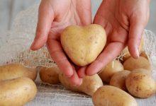 Photo of فوائد البطاطا على صحة الإنسان وجماله