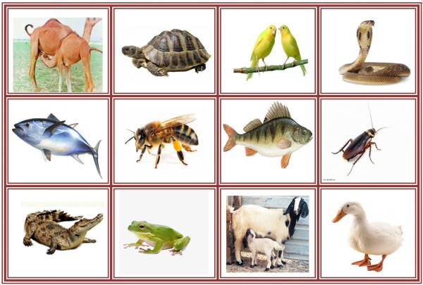 أقسام الحيوانات