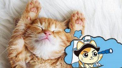 Photo of تفسير رؤياء القطط الميته في الحلم , معنى القطة الميته في المنام , رؤية قط ميت في طريقي
