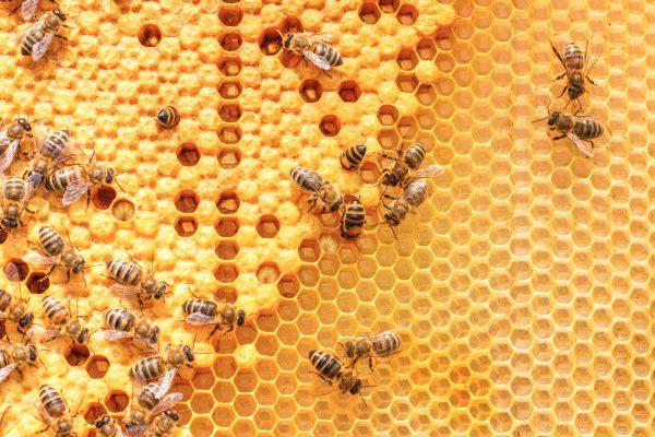 عسل النحل المغشوش