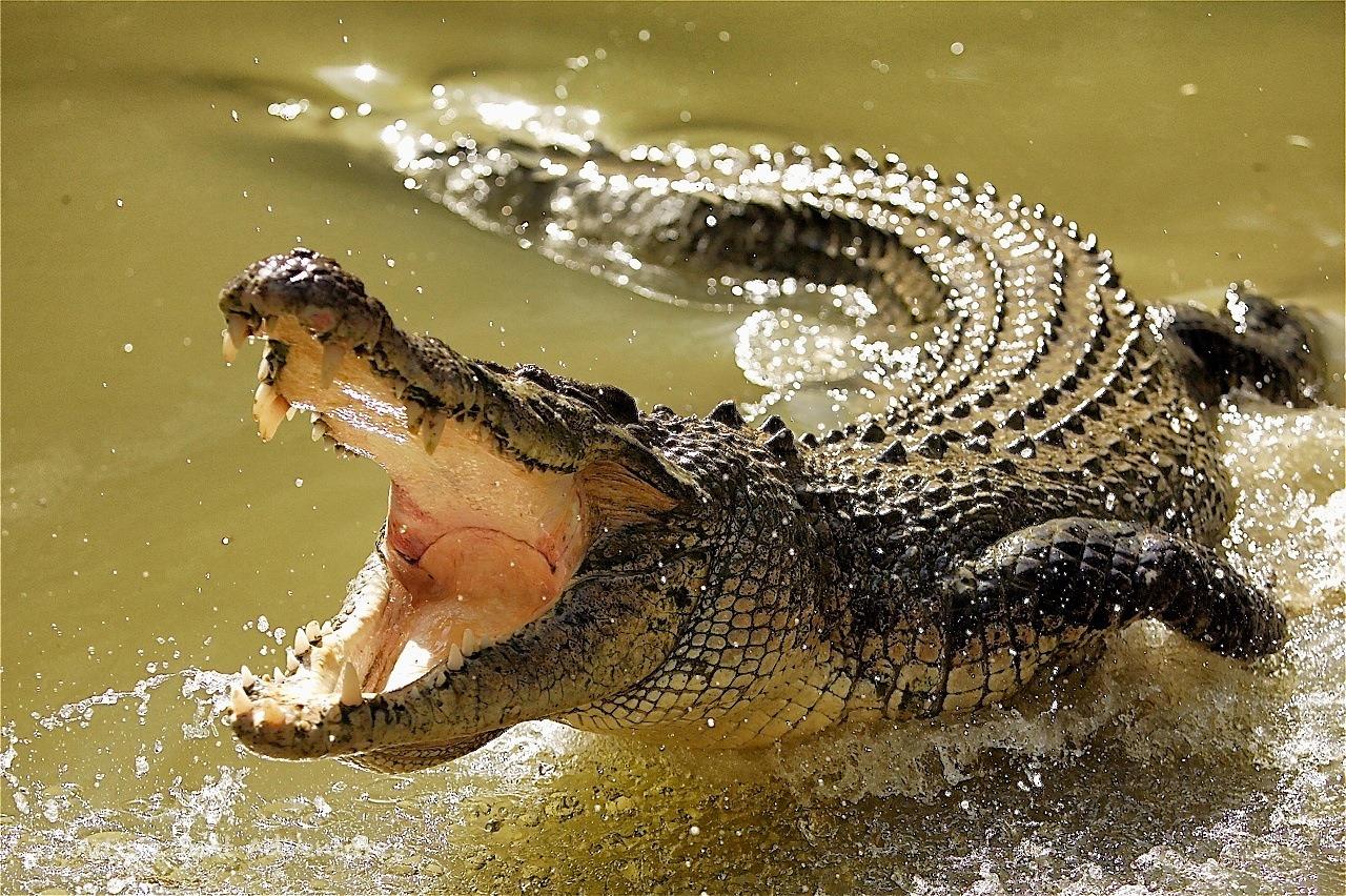 أخطر الحيوانات
