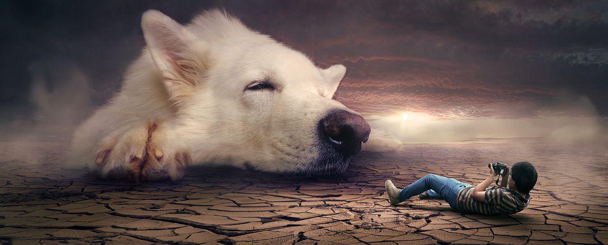 تفسير رؤية الكلاب في المنام