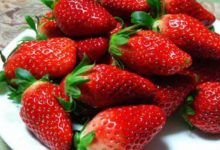 Photo of 8 فوائد عن الفراولة لا تعرفها من قبل