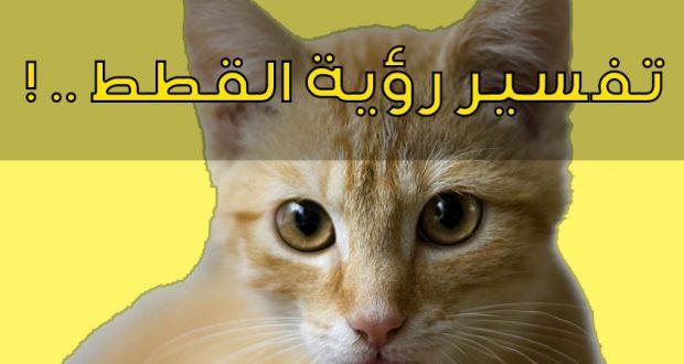 تفسير حلم القطه في المنام مجلة رجيم