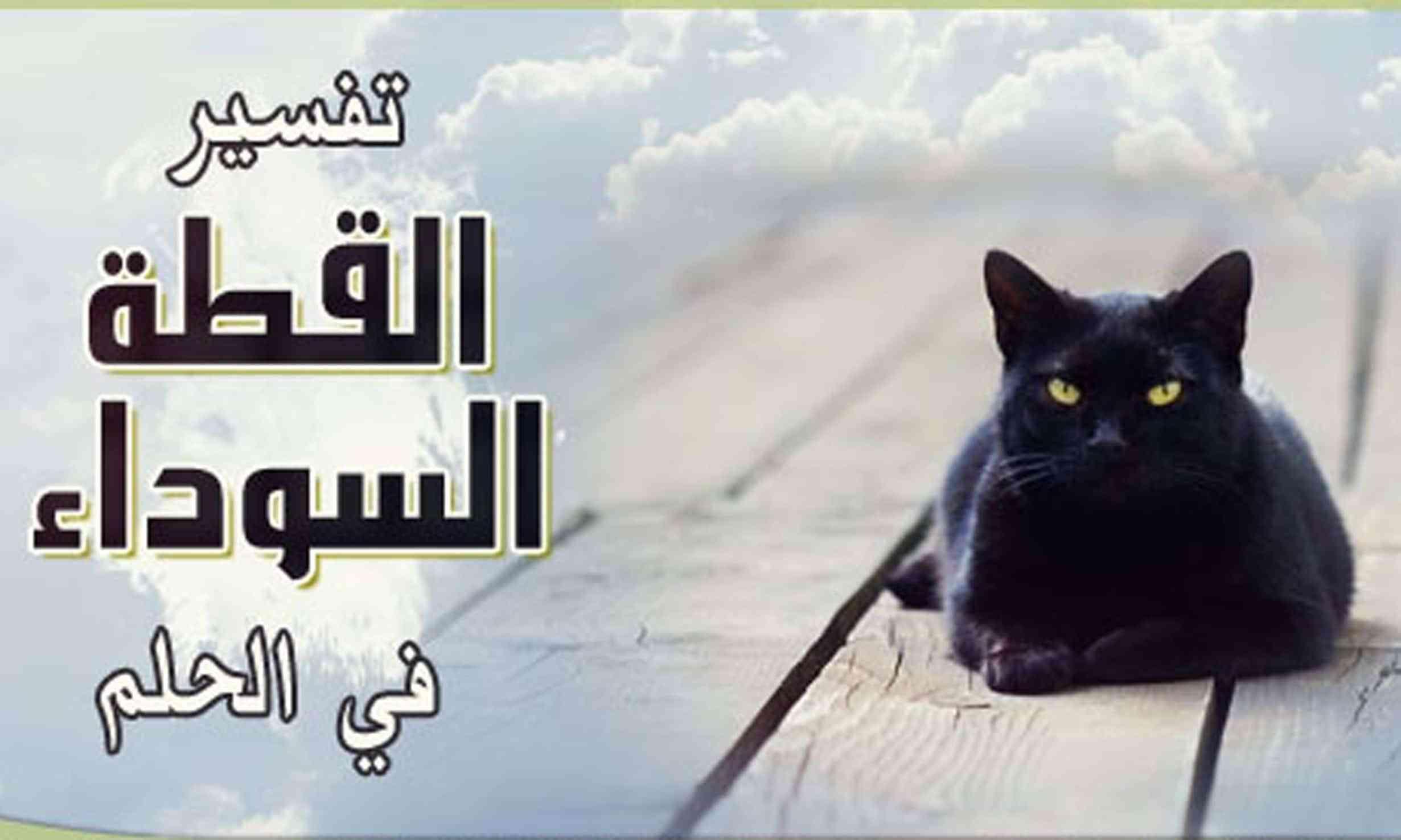 تفسير حلم القطط في المنام مجلة رجيم