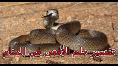 Photo of تفسير حلم الافعى