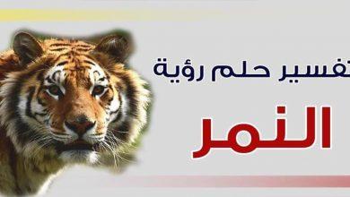 Photo of تفسير حلم النمر