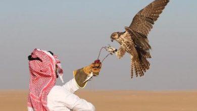 Photo of عبارات عن الصقر