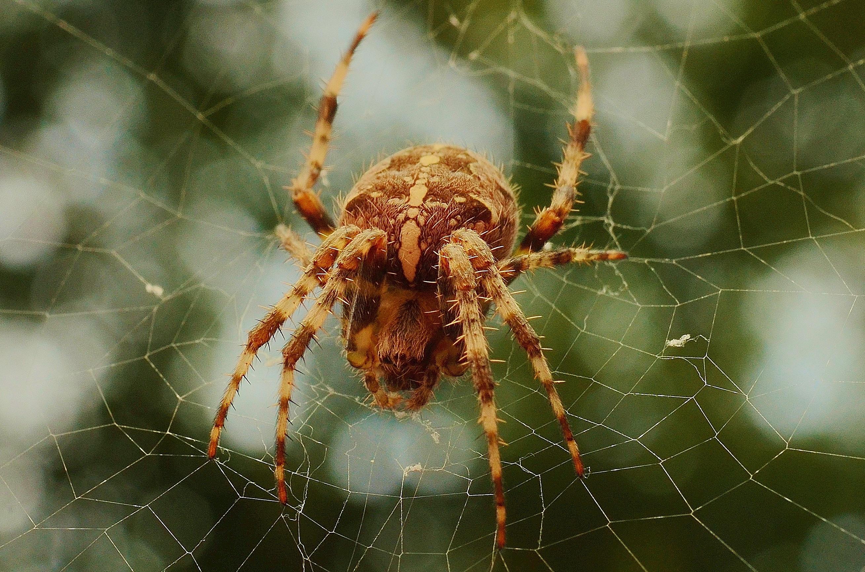 تفسير حلم العنكبوت للعزباء