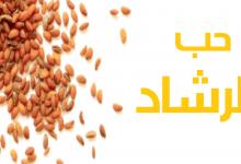 Photo of فوائد حب الرشاد