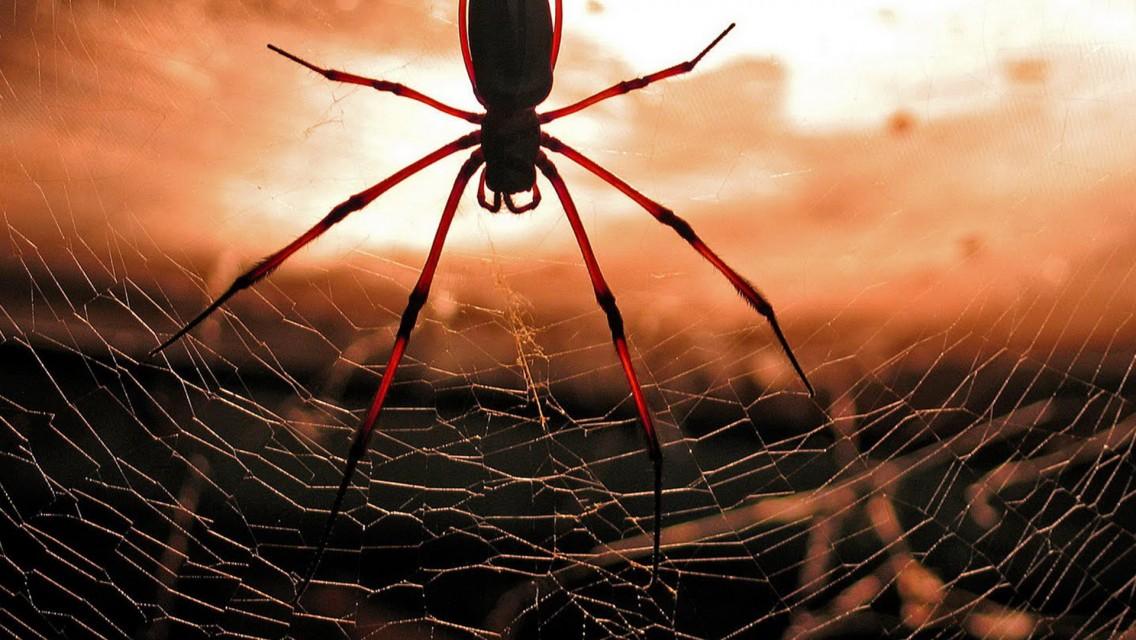 تفسير حلم العنكبوت للمتزوجة