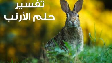 Photo of تفسير حلم الارنب