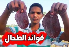 Photo of فوائد الطحال