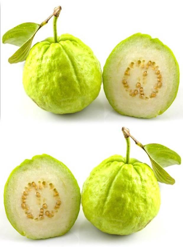 فوائد الجوافة